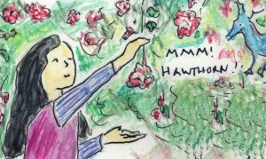Mmm! Hawthorn! - art from Paloma And Wings - a Kids Herbal Comic by Jane Valencia (c) 2012