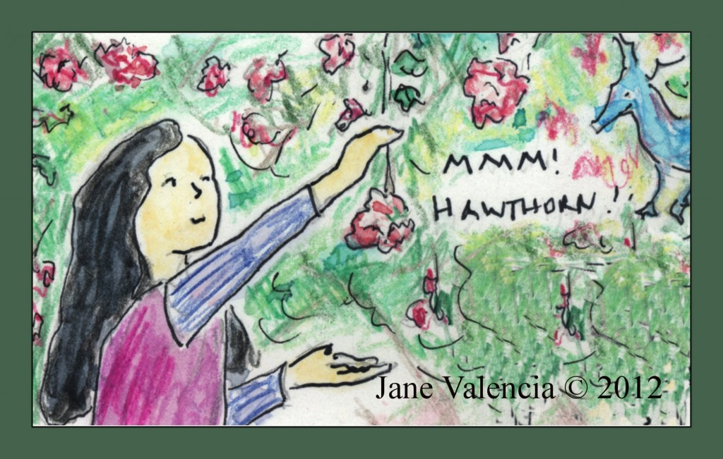 Paloma and her dragon friend Wings celebrate Hawthorn - Art by Jane Valencia (c) 2012