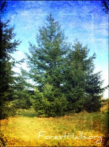 How about standing like this tree? Douglas-fir - photo by Jane Valencia