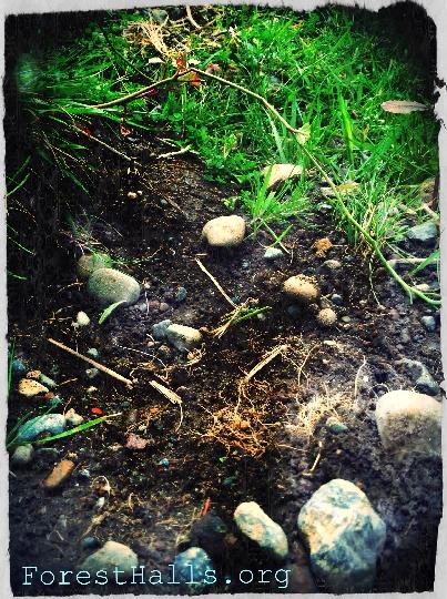 The Magic of Dirt