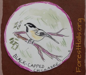Black-Capped Chickadee - art for one of my students.