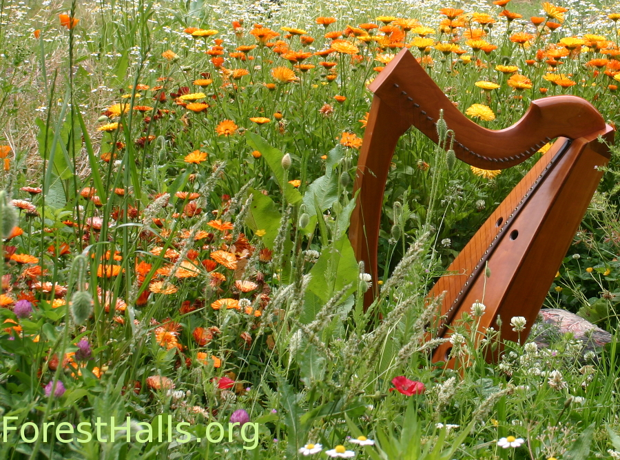 Harp and Herbs photo